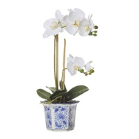 Hamptons Butterfly Orchid In Chinoiserie Pot 50cm (7364706WH)