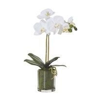 Hamptons Butterfly Orchid with Moss in Glass Pot 38cm (7811600WH)